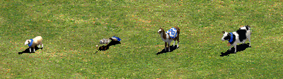 herdable_animals